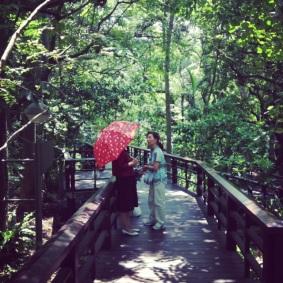 Slunečník (resp. deštník) chránící před opálením je Taiwanských krásek nutností