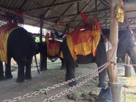 Tyhlety sloní farmy jsou ta nejsmutnější věc pod sluncem. Chudáci sloníci.