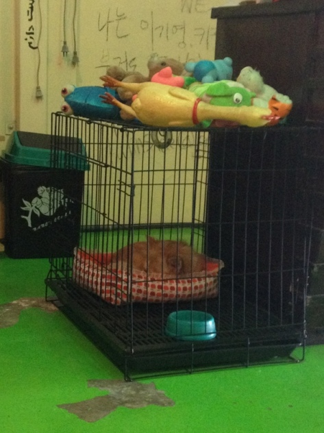 Hostelový pes