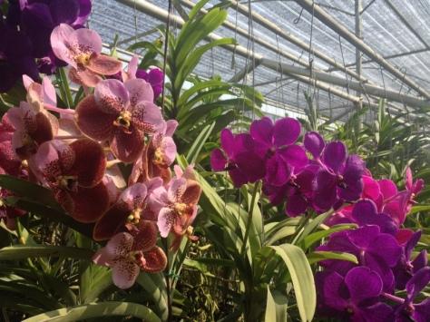 První zastávka: Orchid and Butterfly farm.