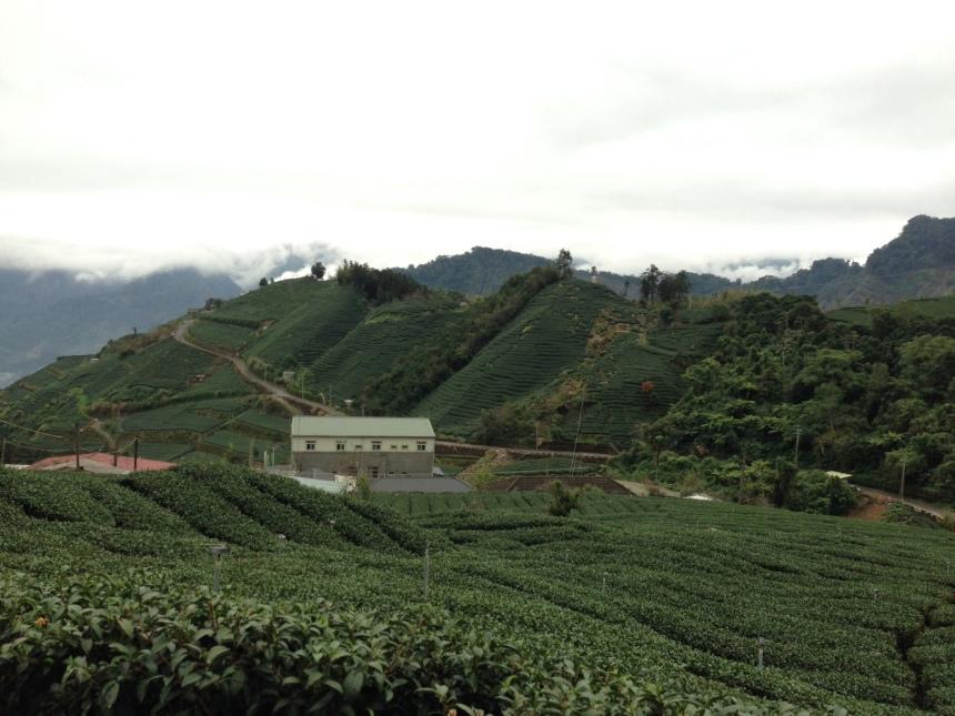 Čajové plantáže po cestě do Alishan Forest Area