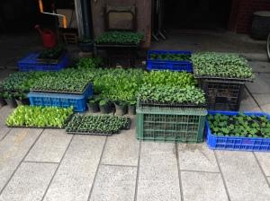 Prodej sazenic zeleniny přímo u chrámu strategické místo je v podnikání velmi důležité. Jiayi City God Temple - vybrat strategické místo je v podnikání velmi důležité.